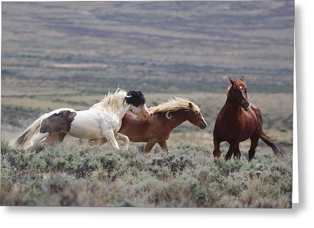 Wyoming Mustangs Greeting Card