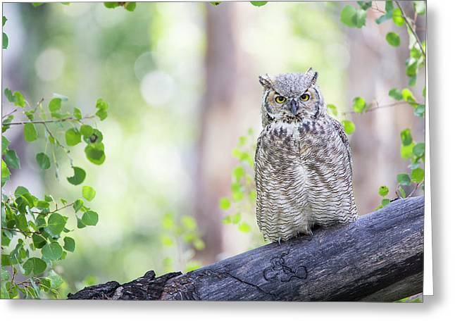 Wyoming, Sublette County, Great Horned Greeting Card by Elizabeth Boehm
