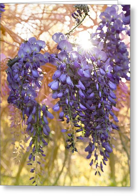 Wysteria Greeting Card by Debra and Dave Vanderlaan