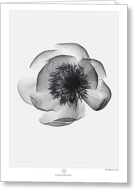 X-ray Flower Greeting Card by Kenword Maah
