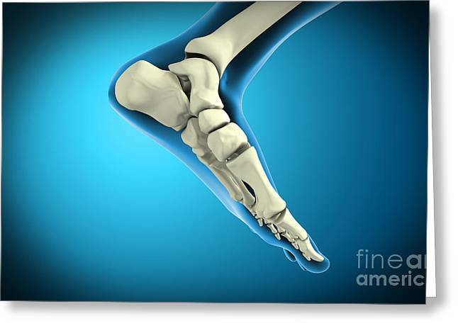 X-ray View Of Bones In Human Foot Greeting Card by Stocktrek Images
