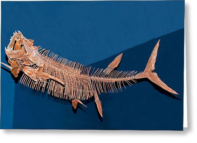 Xiphactinus Audax Fish Fossil Greeting Card