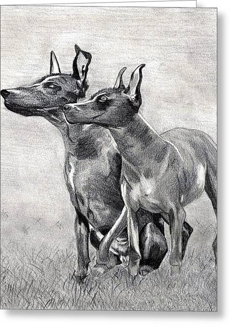 Xoloitzcuintli Dog Greeting Card by Olde Time  Mercantile