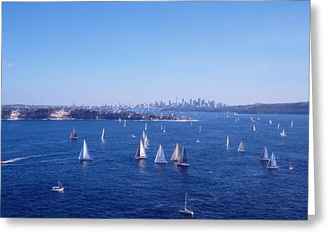 Yachts In The Bay, Sydney Harbor Greeting Card by Panoramic Images