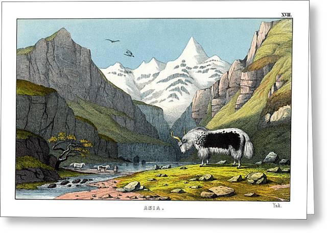 Yak Greeting Card by Splendid Art Prints
