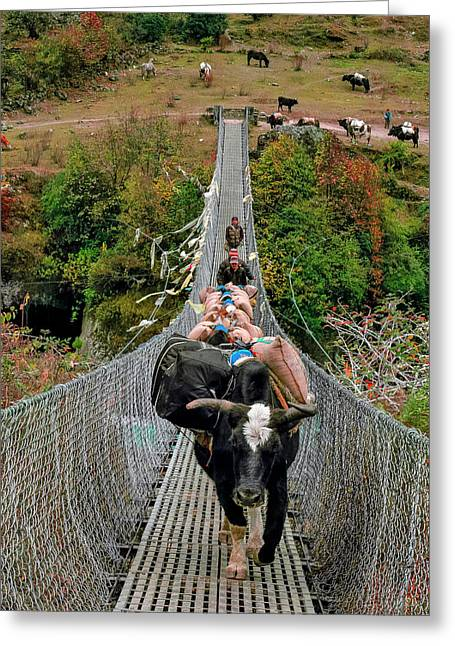 Yaks On Rope Bridge Greeting Card by Babak Tafreshi