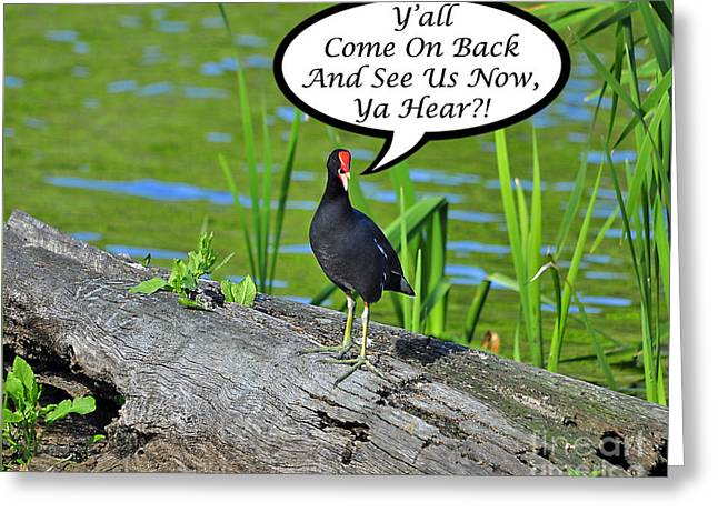 Y'all Come Back Moorhen Card Greeting Card by Al Powell Photography USA