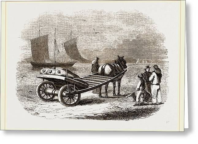 Yarmouth Beach-cart With Fish Greeting Card by Litz Collection