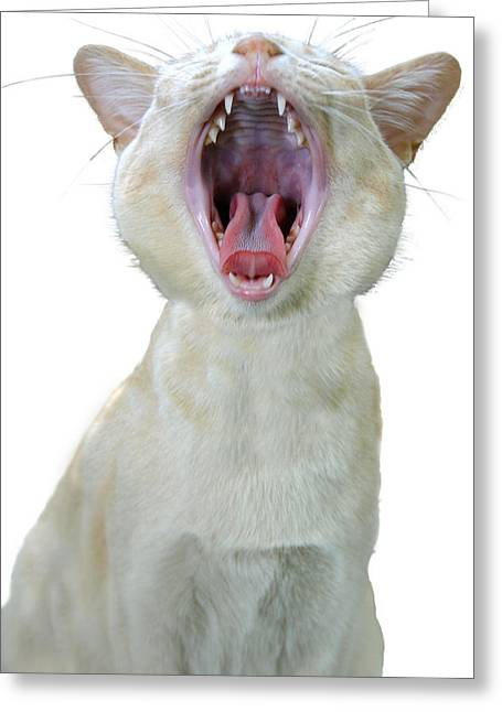 Yawning Cat Greeting Card