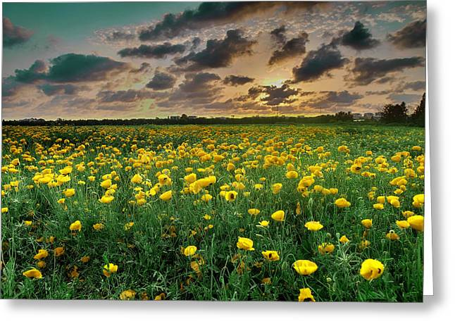 Greeting Card featuring the photograph Yello Poppies by Meir Ezrachi