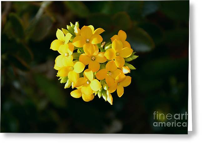 Greeting Card featuring the photograph Yellow Allegria  by Ramona Matei