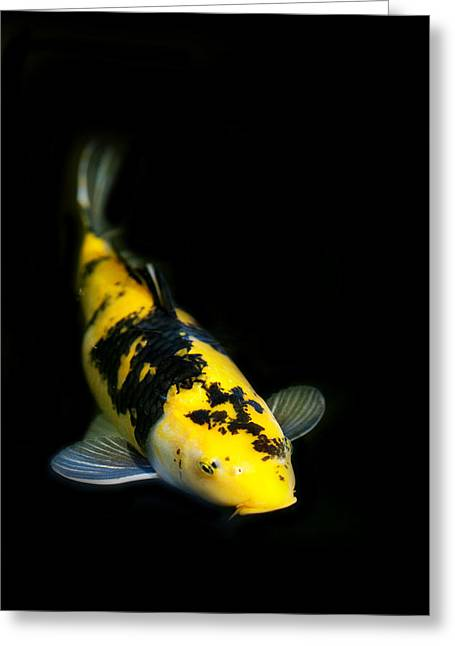 Yellow And Black Koi Greeting Card by Rebecca Cozart