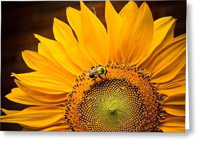 Greeting Card featuring the photograph Yellow And Black by Sara Frank