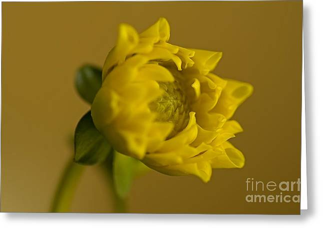 Yellow And Green Greeting Card by Nick  Boren