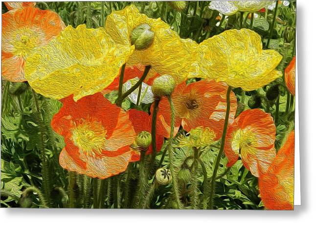 Yellow And Orange Poppies Greeting Card by Dee Meyer