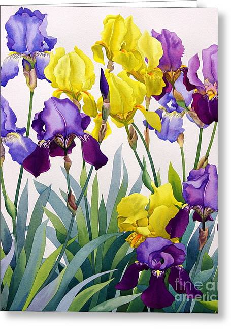 Yellow And Purple Irises Greeting Card by Christopher Ryland