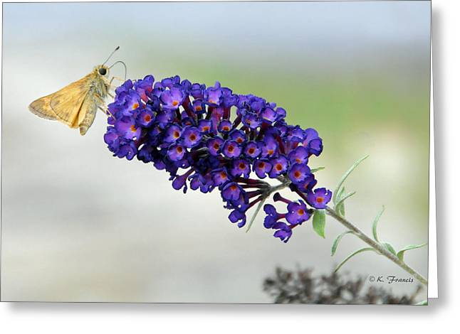 Yellow And Purple Greeting Card by Kenny Francis