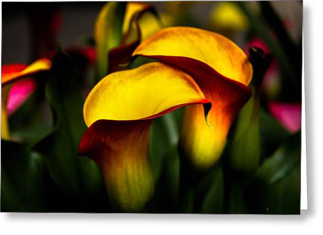 Yellow And Red Calla Lily Greeting Card by Menachem Ganon