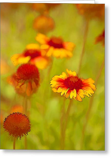 Indian Blanket Coneflower Greeting Card