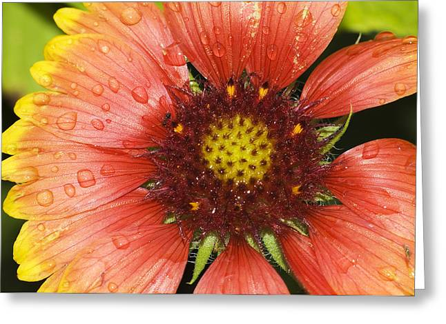 Yellow And Red Greeting Card by Robert Culver