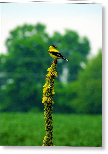 Yellow Greeting Card by Andrea Dale