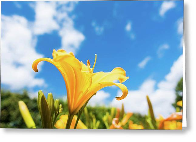 Yellow Aster Flower Greeting Card by Wladimir Bulgar