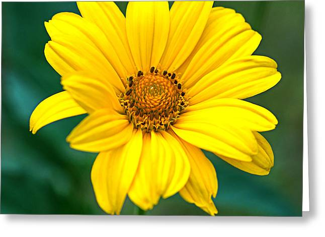 Yellow Beauty Greeting Card by Alana Ranney