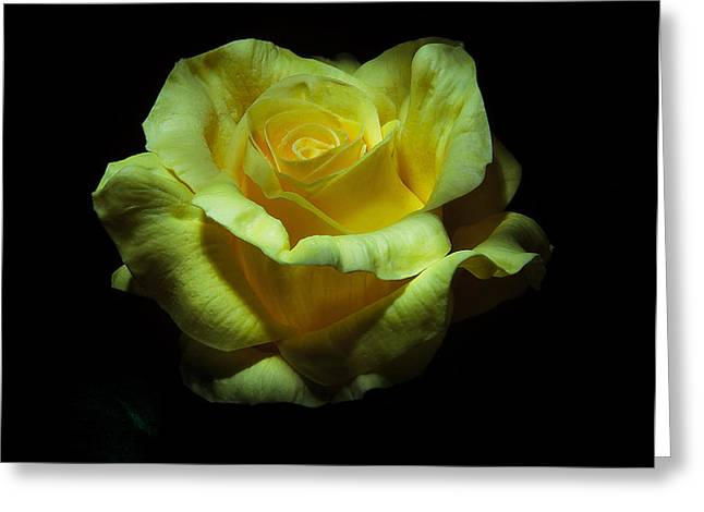 Yellow Beauty Greeting Card by Cecil Fuselier