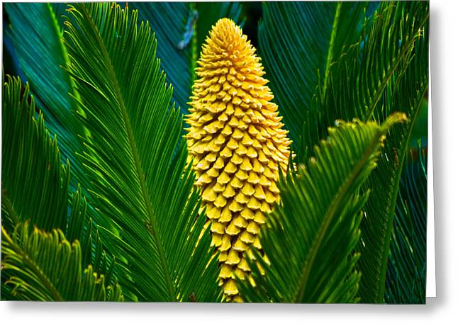 Yellow Beauty Pla 365 Greeting Card