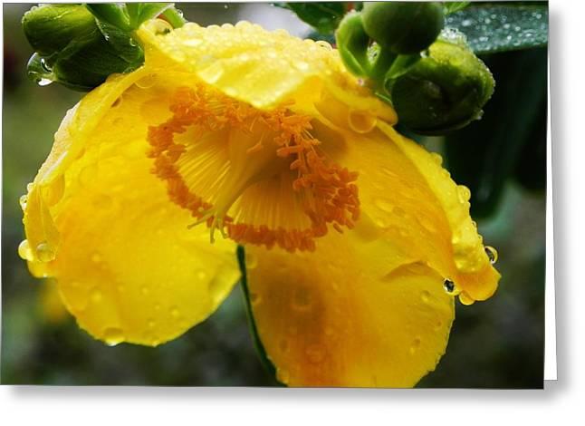 Yellow Beauty Greeting Card by Renalda  Cullhaj