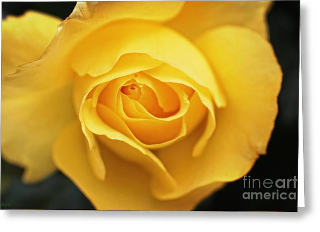 Yellow Beauty Rose Greeting Card by Ella Kaye Dickey