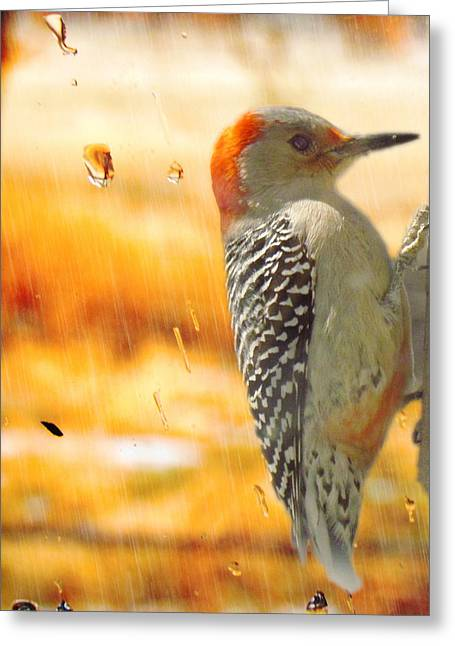 Yellow-bellied Woodpecker Greeting Card