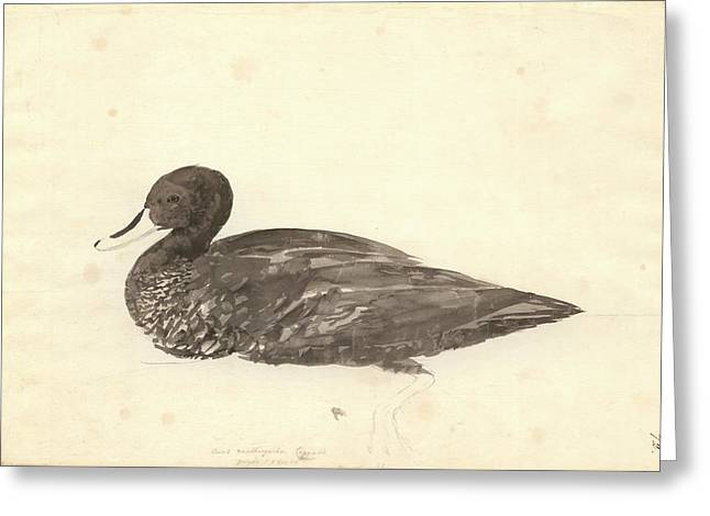 Yellow-billed Duck Greeting Card by Natural History Museum, London