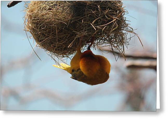 Yellow Bird Retuns To Nest Greeting Card