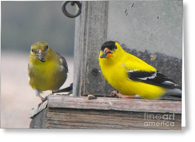 Yellow Birds Greeting Card by Erick Schmidt