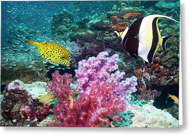 Yellow Boxfish And Moorish Idol Greeting Card