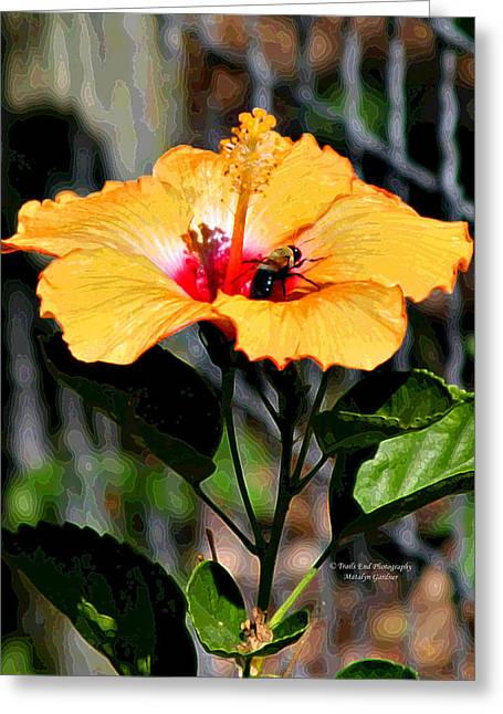 Yellow Bumble Bee Flower Greeting Card