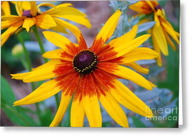 Greeting Card featuring the photograph Yellow Burst by Allen Beatty