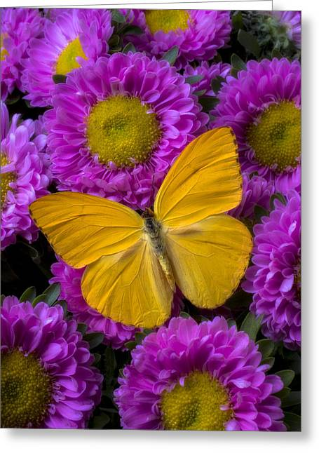 Yellow Butterfly And Pink Flowers Greeting Card by Garry Gay