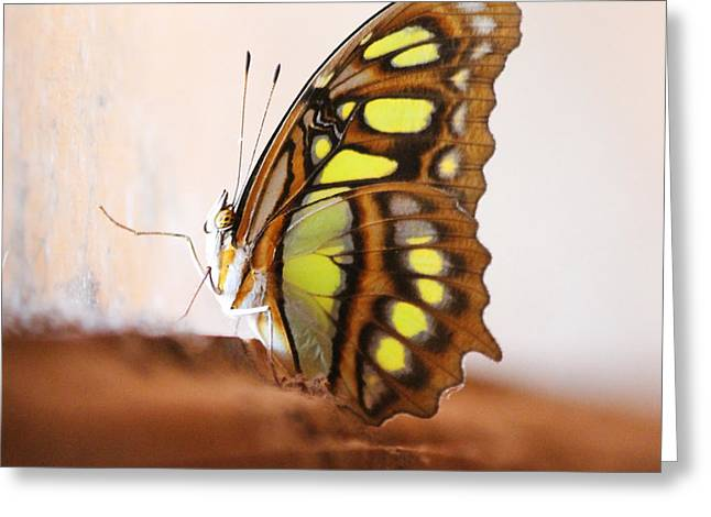 Yellow Butterfly Greeting Card by Nathan Miller