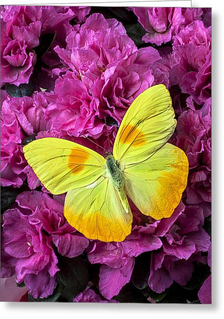 Yellow Butterfly On Pink Azalea Greeting Card by Garry Gay