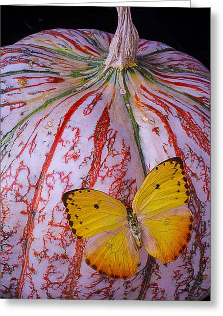 Yellow Butterfly On Pumpkin Greeting Card by Garry Gay