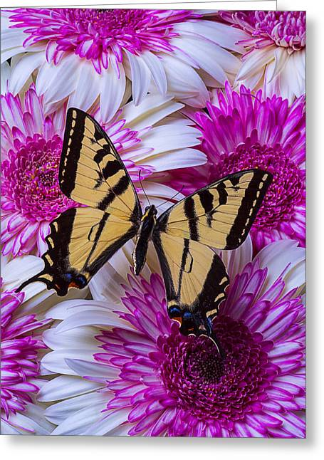 Yellow Butterfly Resting Greeting Card by Garry Gay