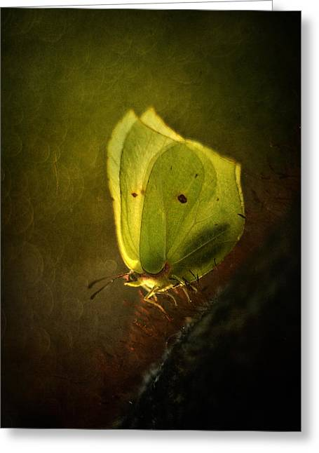 Yellow Butterfly Sitting On The Moss  Greeting Card