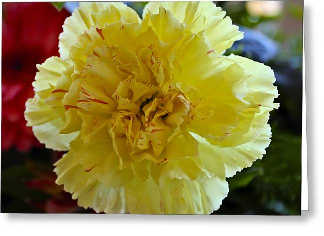 Yellow Carnation Delight Greeting Card by Kurt Van Wagner