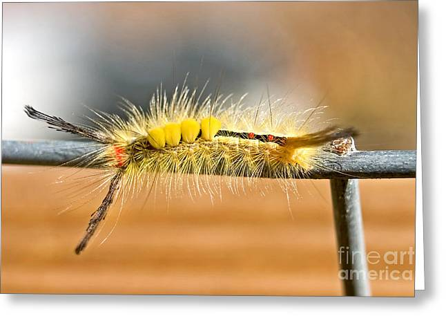 Yellow Caterpillar Greeting Card