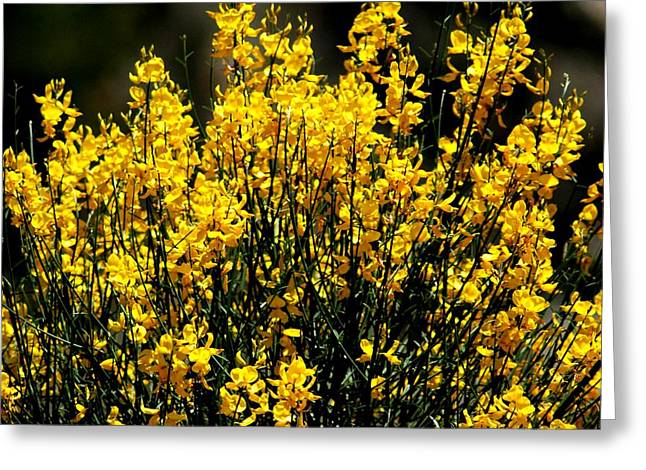 Greeting Card featuring the photograph Yellow Cluster Flowers by Matt Harang