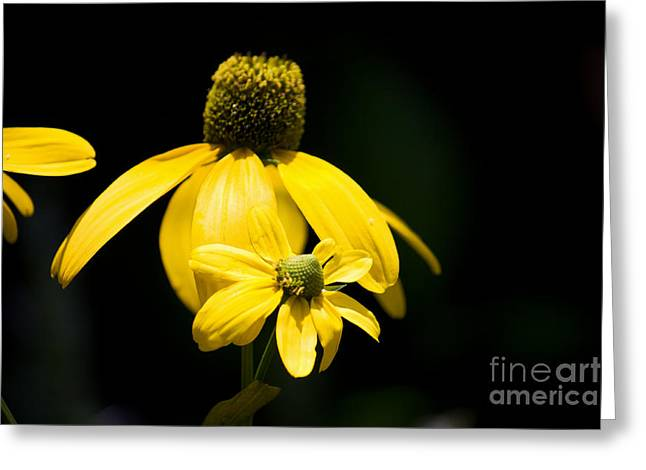 Yellow Coneflower Greeting Card