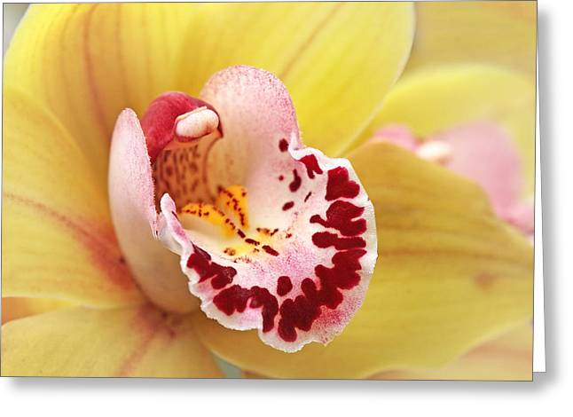Yellow Cymbidium Orchid Greeting Card by Gill Billington