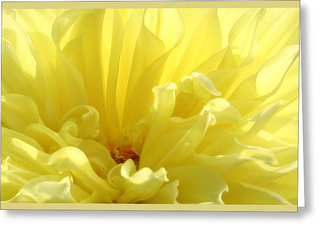 Yellow Dahlia Burst Greeting Card